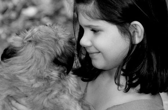 Img autismo infantil perros ninos animales terapia perros asistencia