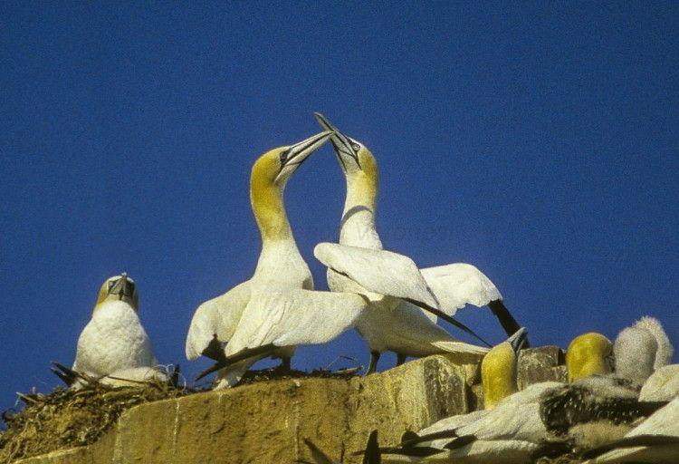Img aves mundo
