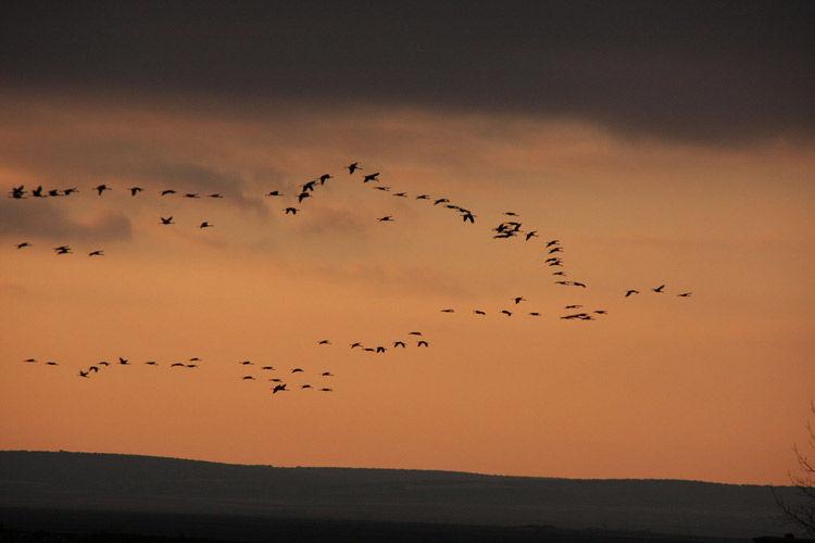 Img aves vuelo