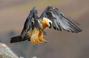 Img aves peligro