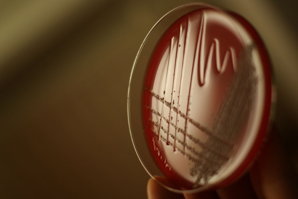 img_bacteria adn_ hd_ 3