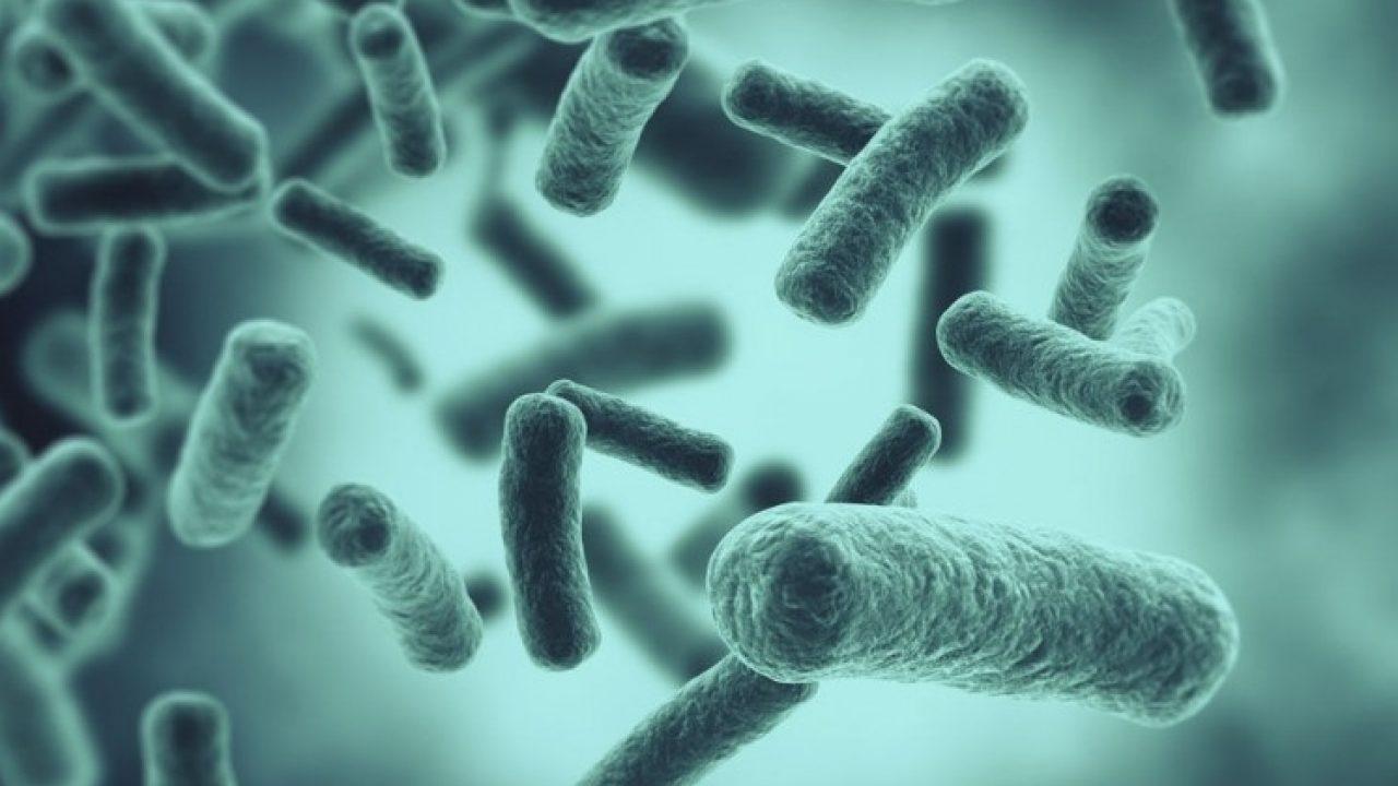 Bacterias: 3 formas de vida nuevas descubiertas en el espacio.