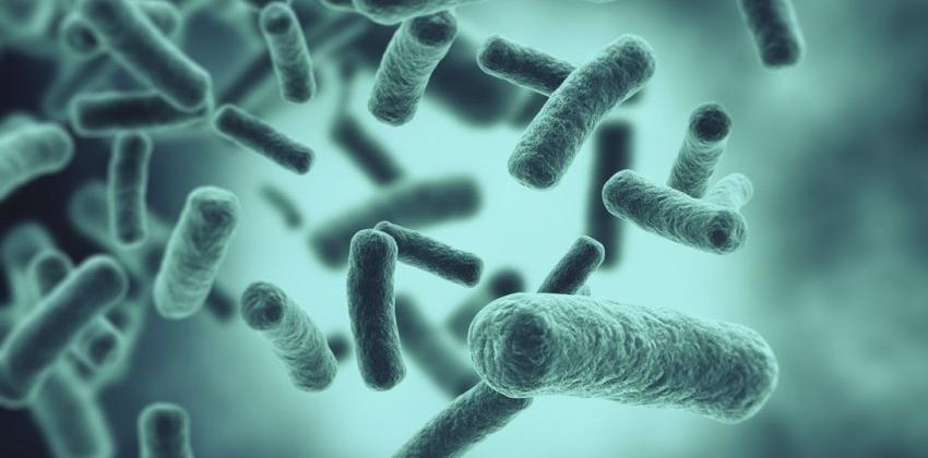 Img bacterias buenas port