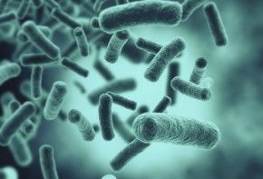 Img bacterias