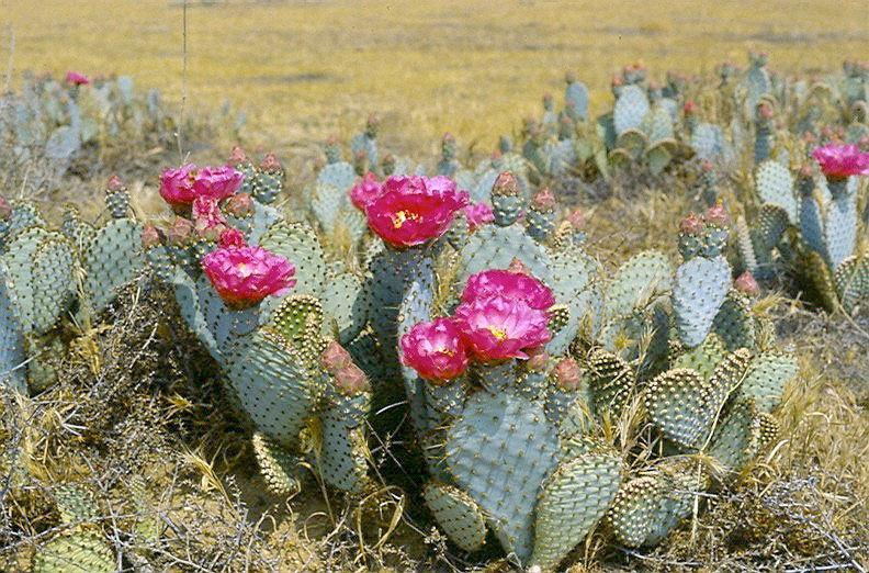 Img bakrsfield cactus