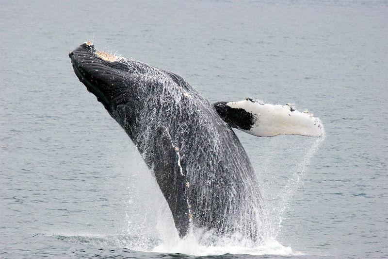 Img ballena