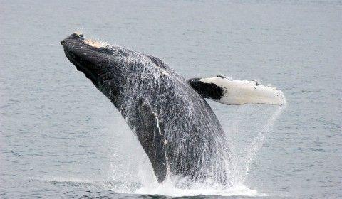 Img ballena01