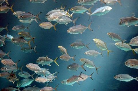 Img banco peces01