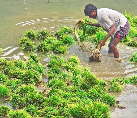 Img bangladesh