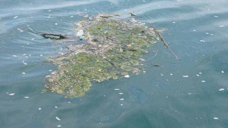 Img basura marina hd