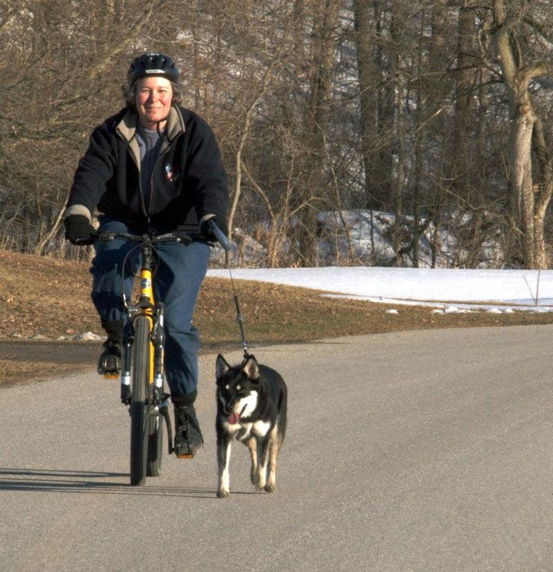 Img bicicleta perro