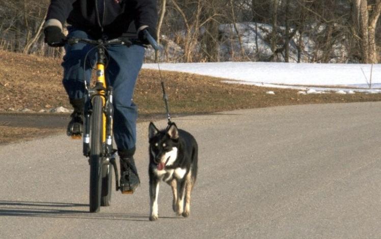 Img bicicleta perros regalos art