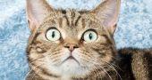Img bigotes gatos misterios secretos