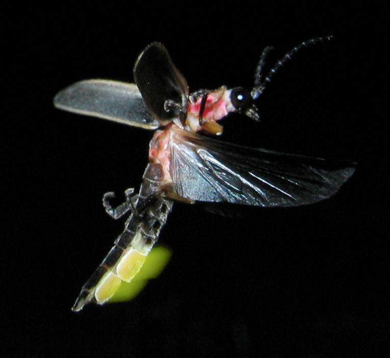 img_bioluminiscencia