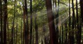 Img bosque