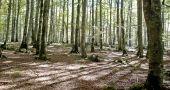 img_bosque 3