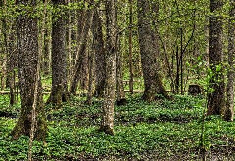 Img bosque001
