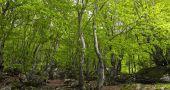 Img bosques hd
