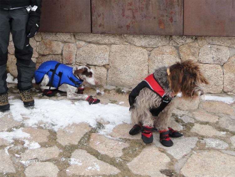 Img botas perro invierno art