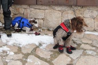 Img botas perro almohadillas art