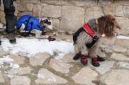 Img botas perro almohadillas listado