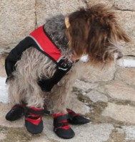 Img botas perro lluvia perro art