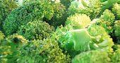 Img brocoli