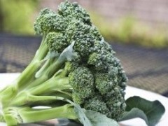 Img brocoli fresco 1