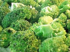 Img brocoli1