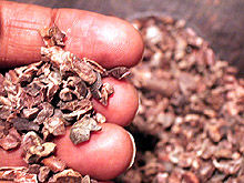 Img cacao