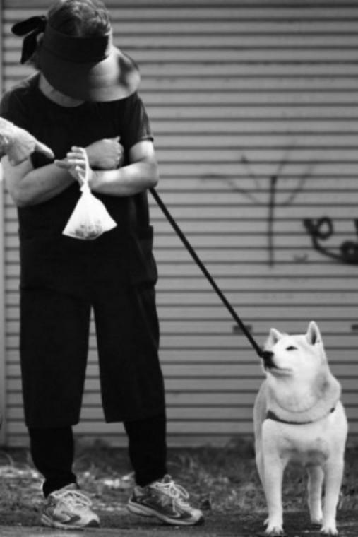 Img cacas perros contaminan