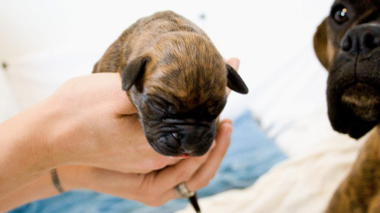 Cachorros De Perro Recién Nacidos Cómo Cuidarles Consumer