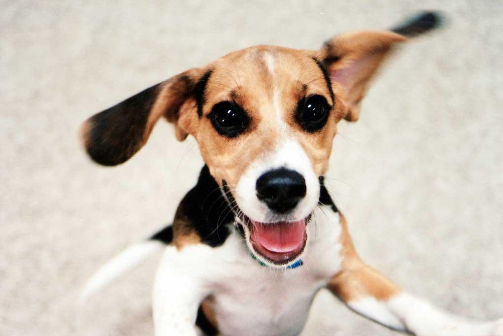 Cachorros nerviosos e impulsivos, causas y soluciones | Consumer