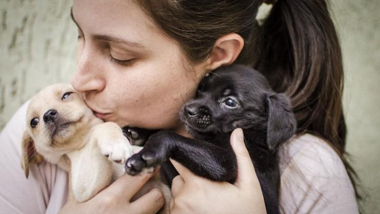 Img cachorros diamundial