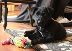 Img cachorros juegos perros inteligencia aburrimiento mascotas juguetes art