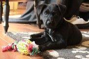 img_cachorros juegos perros inteligencia aburrimiento mascotas juguetes listado