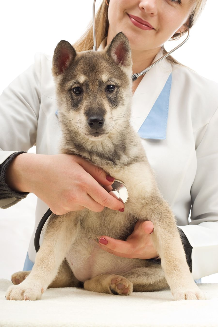 img_cachorros parvo salud perros