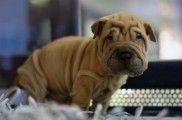 Img cachorros perros comprar vender legislacion normas tiendas animales listado