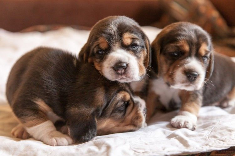 Img cachorros primeros auxilios listg