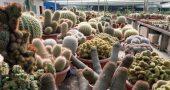 Img cactus