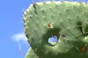 Img cactus list