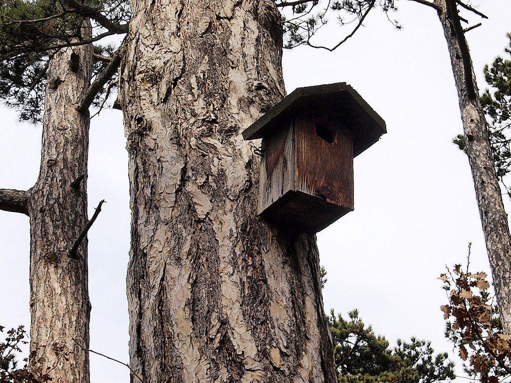 Img caja nido