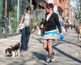 Img calle perro caca excremento art
