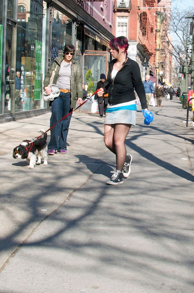 Img calle perro