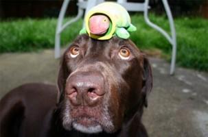 Img cancer perro detectar enfermedad art