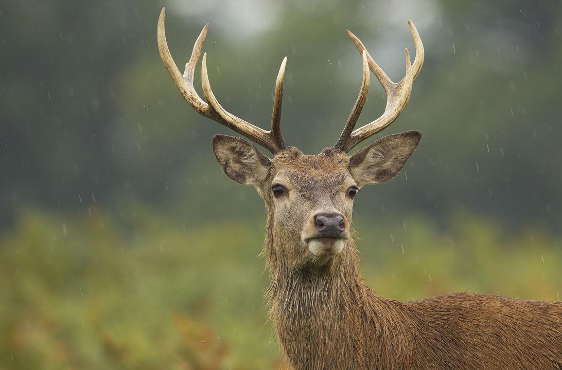 Caquexia crónica, ¿afecta a la carne de ciervo? | Consumer