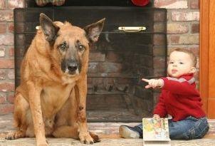Img cara culpa perros mito mentiras animales mascotas art