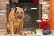 Img cara culpa perros mito mentiras animales mascotas listado