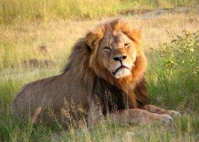 Img cecil leon