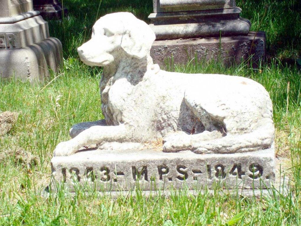 Img cementerio perrosnuestra